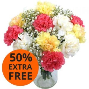Mixed Carnations with 50% Extra Free