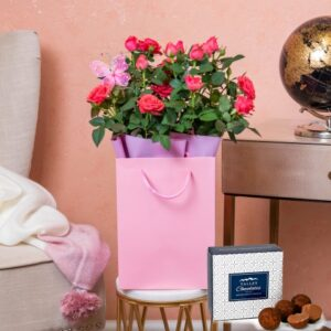 Beautiful Rose Plant - Indoor Plants - Plant Delivery - Plant Gifts - Plant Gift Delivery - Send Plants